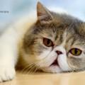 安徽养猫人